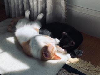 Umi & Loki/Courtesy post 3