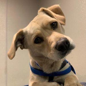 I1351397 Chihuahua Dog