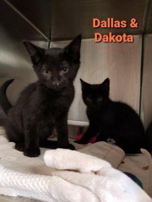 Dallas (m) & Dakota (f)