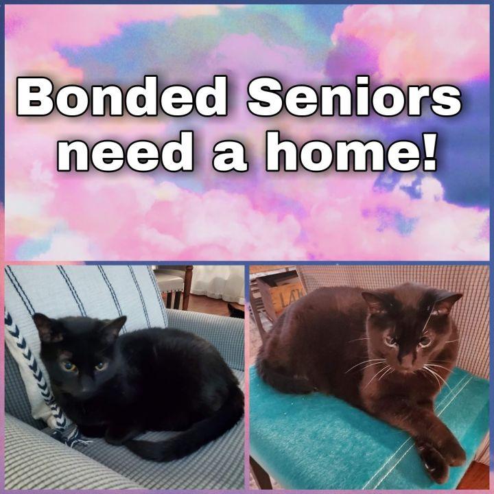 Buddy & Katja~ bonded senior pair 3