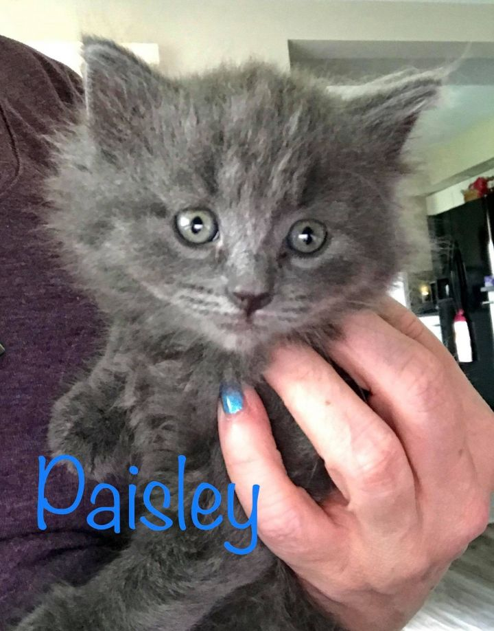 Paisley 1