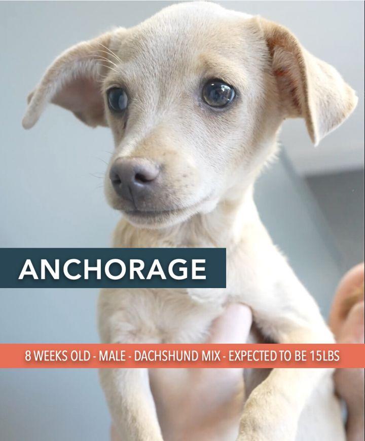Anchorage 1