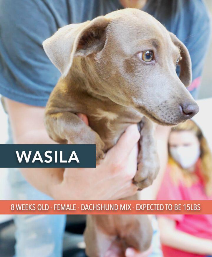 Wasila 1