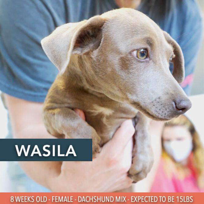 Wasila