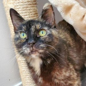 Hi Im Meatball I used to be a little shy but now I crave to be around humans more and