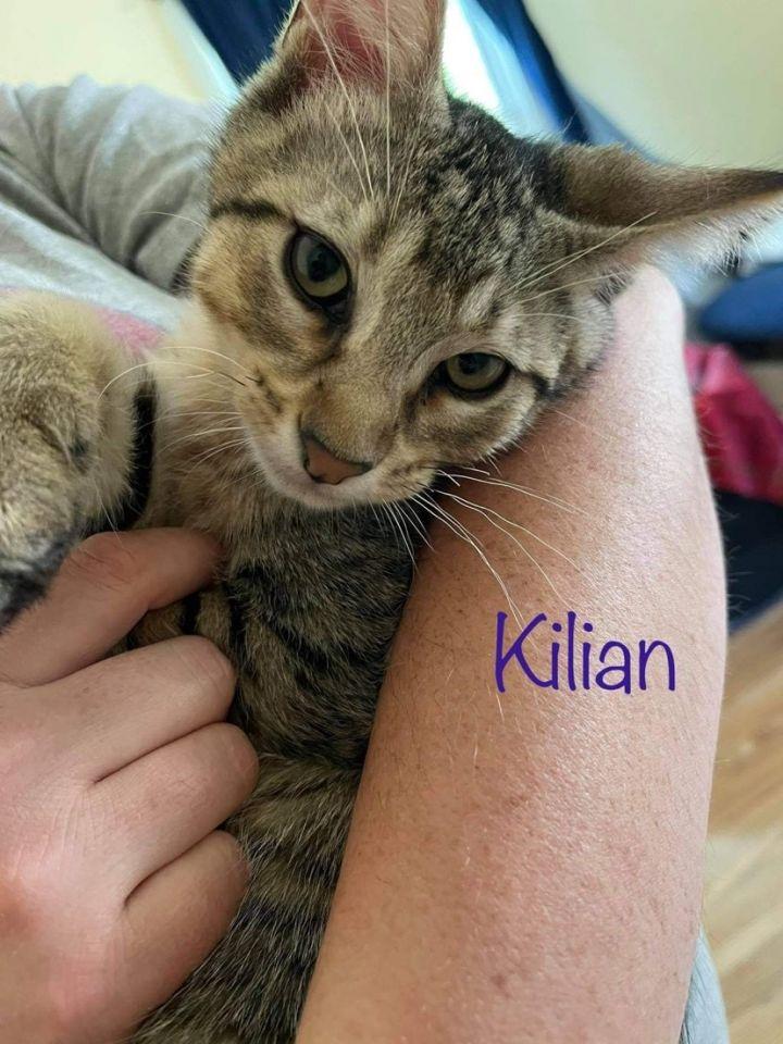 Kilian 1