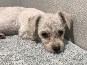 I1351433 Terrier Dog