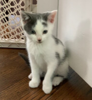 This adorable little kitten is Rosemary She is 10-weeks-old and ready to find her forever home She