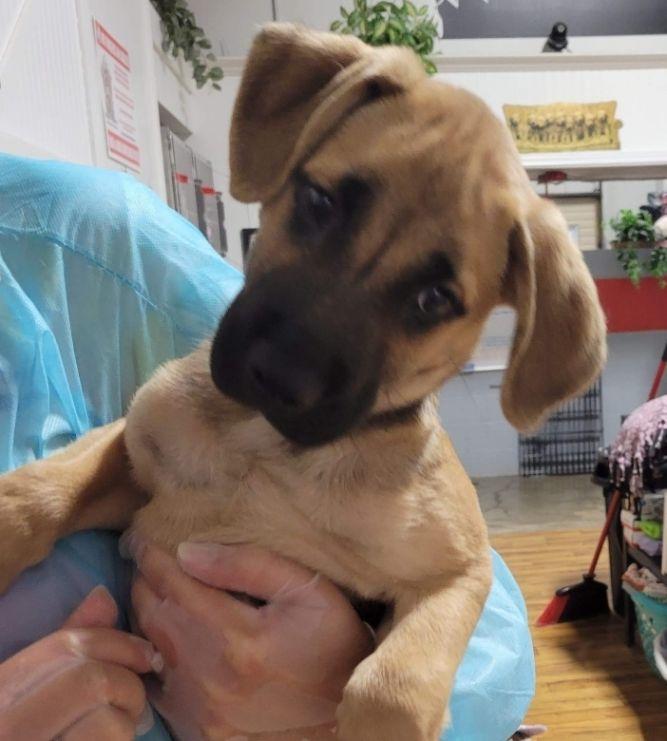 Oscar ~ new arrival puppy