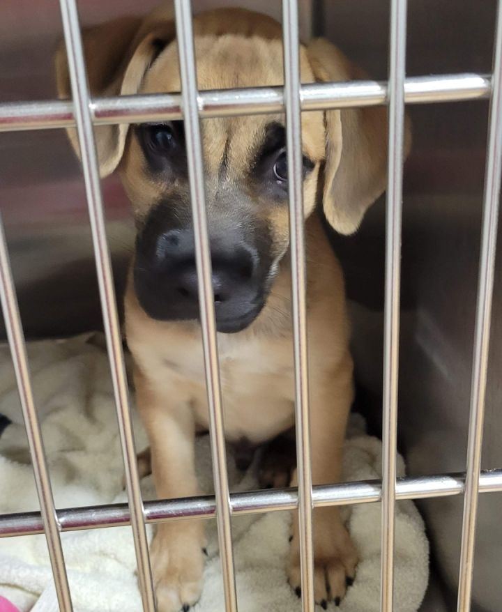 Oscar ~ new arrival puppy 2