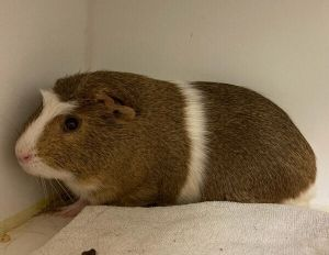 Primary Color Brown Secondary Color White Age 1yrs 0mths 0wks