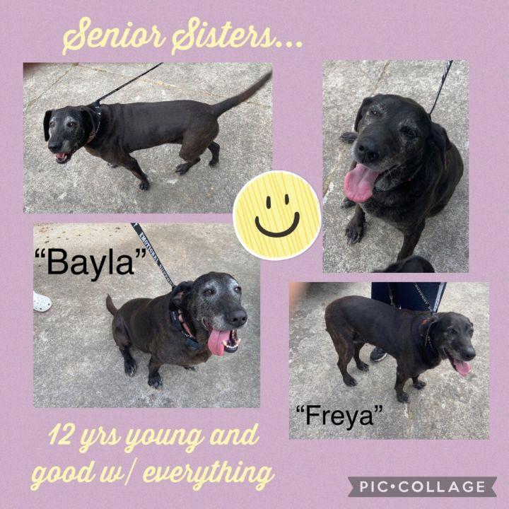 Freya 2