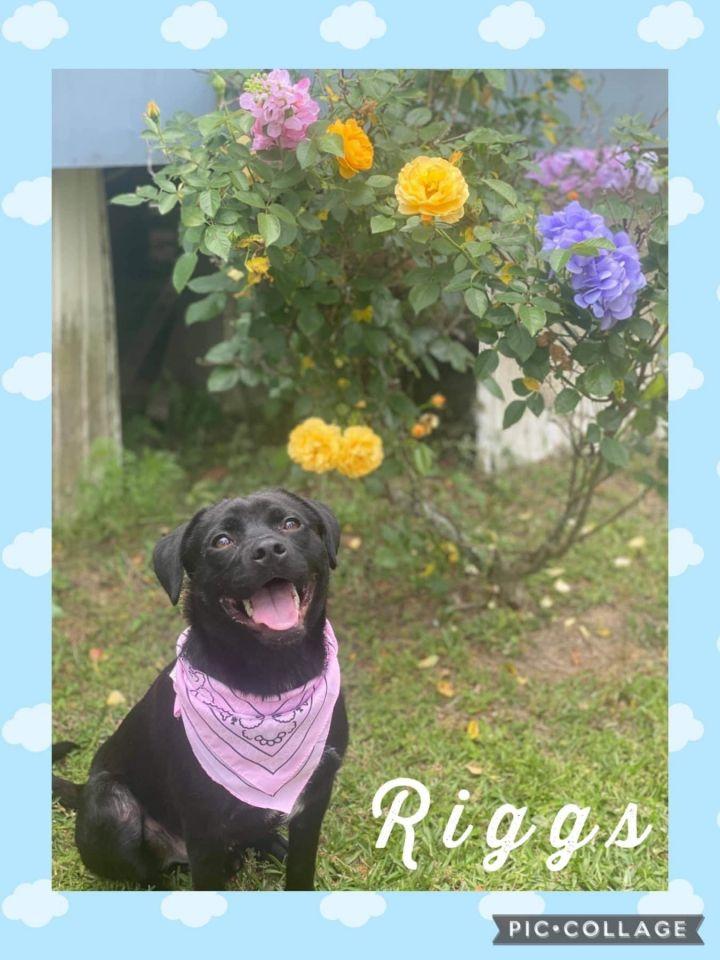 Riggs 5