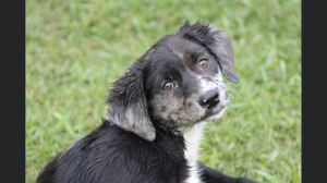 Annabelle - Fostered in VT