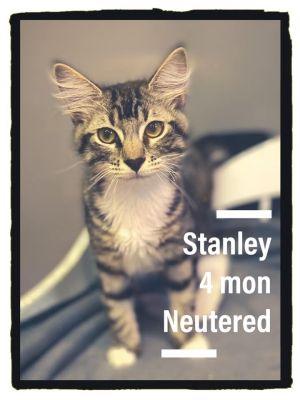Stanley Kitty