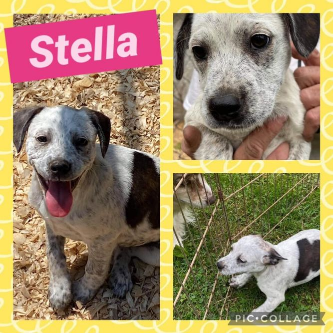 Stella Pup