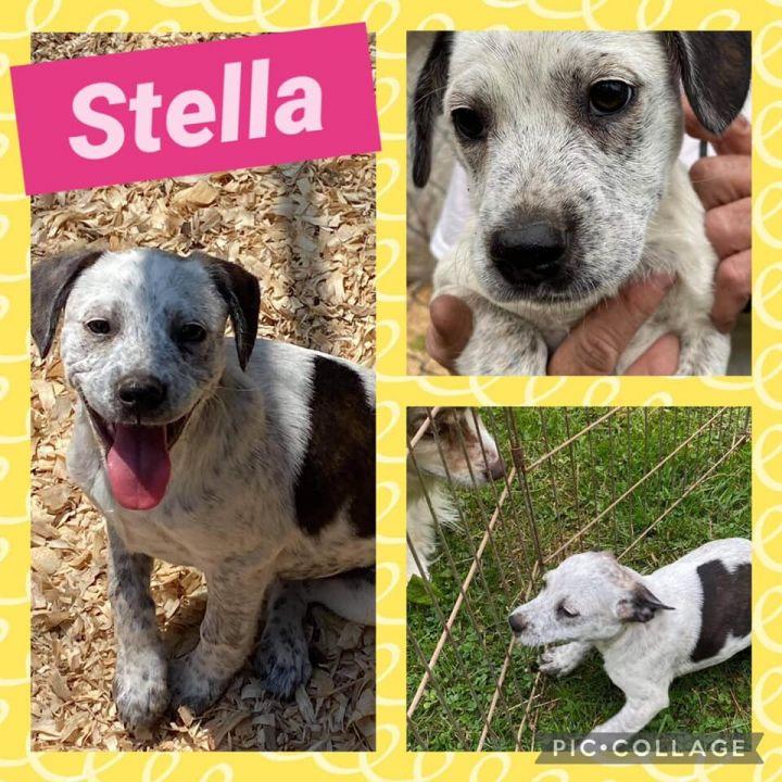 Stella Pup 1