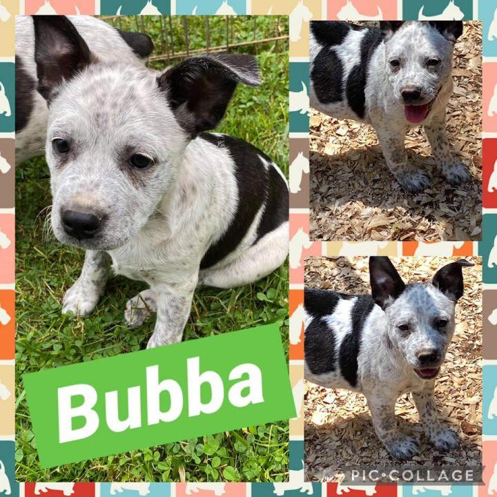 Bubba 1
