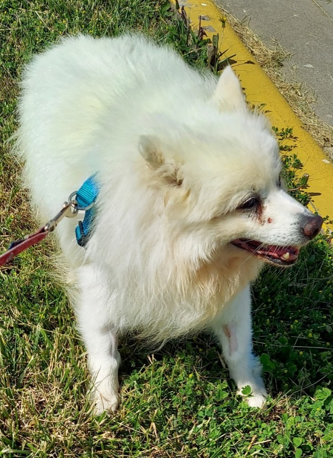 Chewy-HOSPICE CARE NEEDED 2