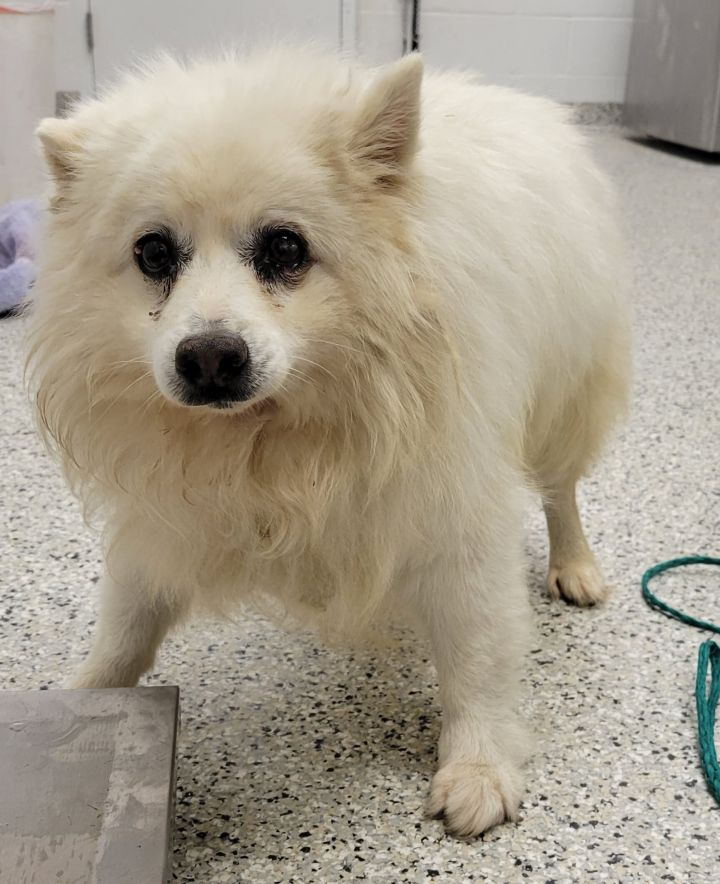 Chewy-HOSPICE CARE NEEDED 3