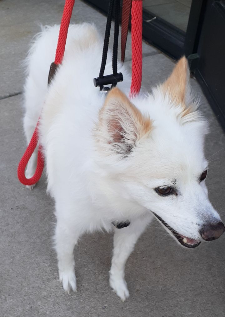 Kingston-Adopted! 1