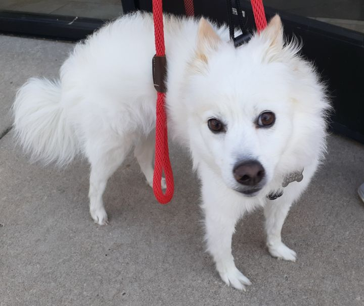 Kingston-Adopted! 2