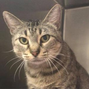Earth is the perfect cat if you are looking for an easygoing lap kitty She is a complete doll and