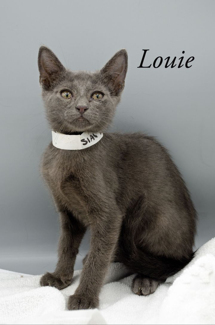 Louie 2