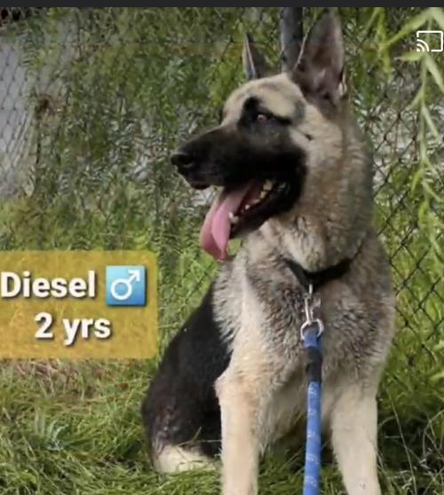 Diesel 2