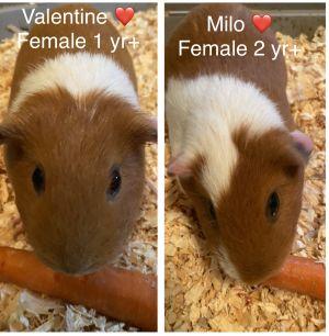 Milo & Valentine