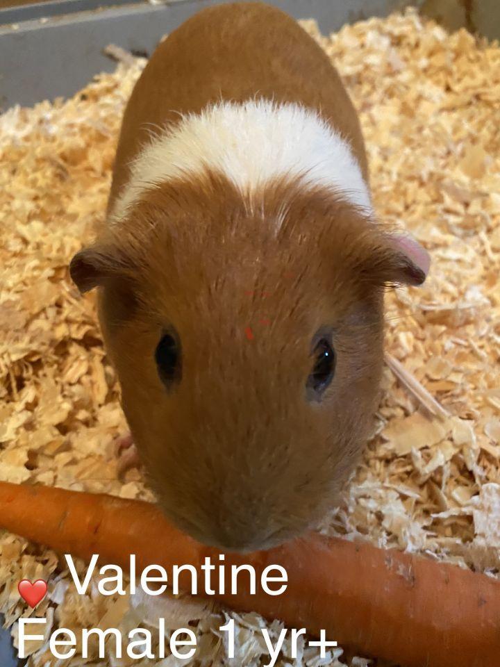 Milo & Valentine 2