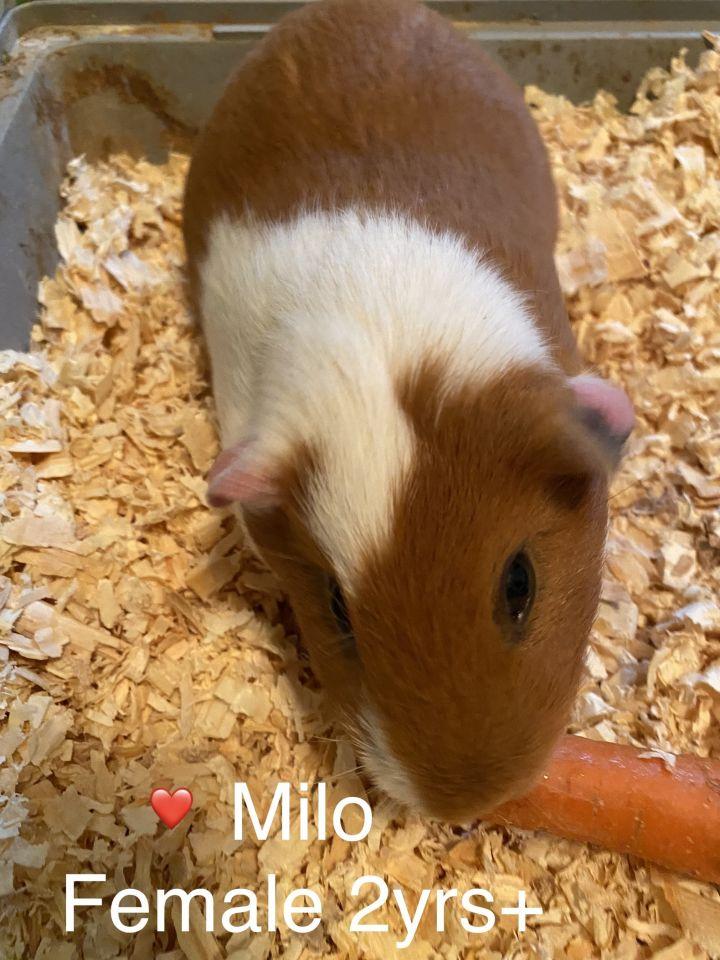 Milo & Valentine 3