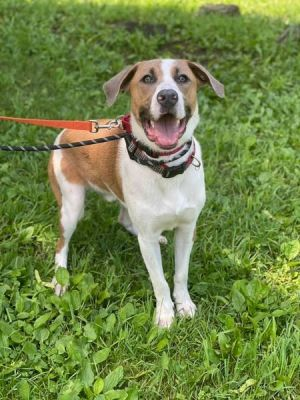 Im Eli Im 7-8 months young and returned this week because Im too BIG Fully vetted crate and ho