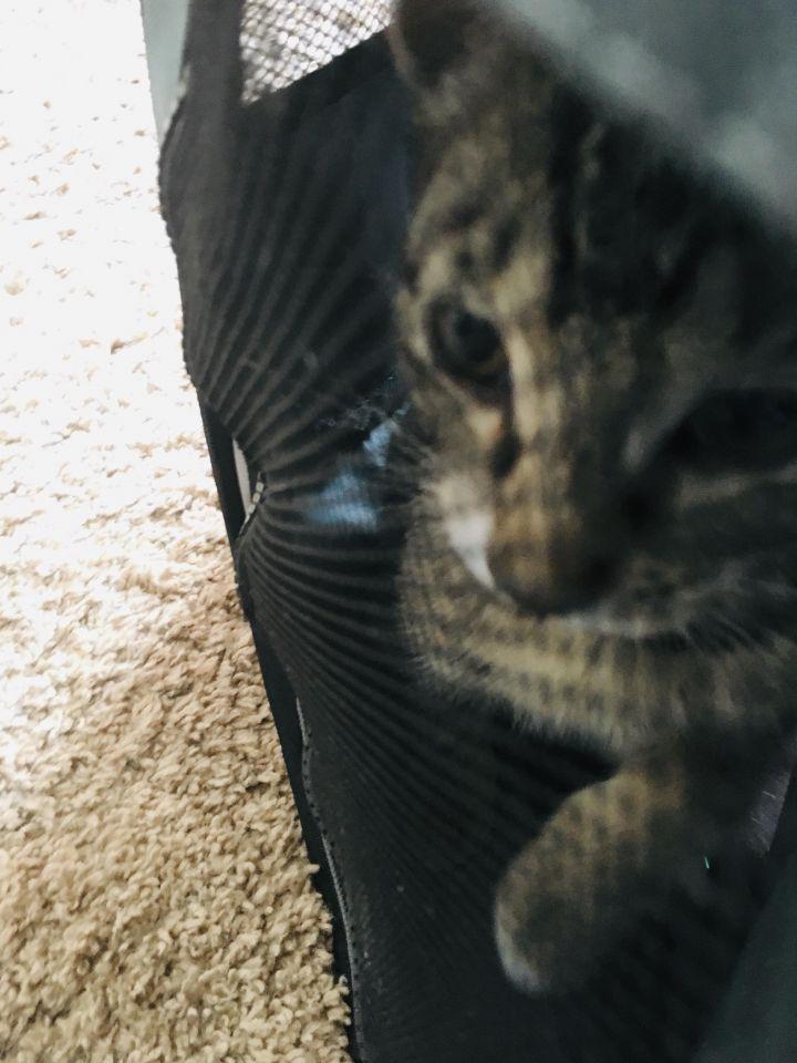 Peter Parker (Cushion kittens) 2