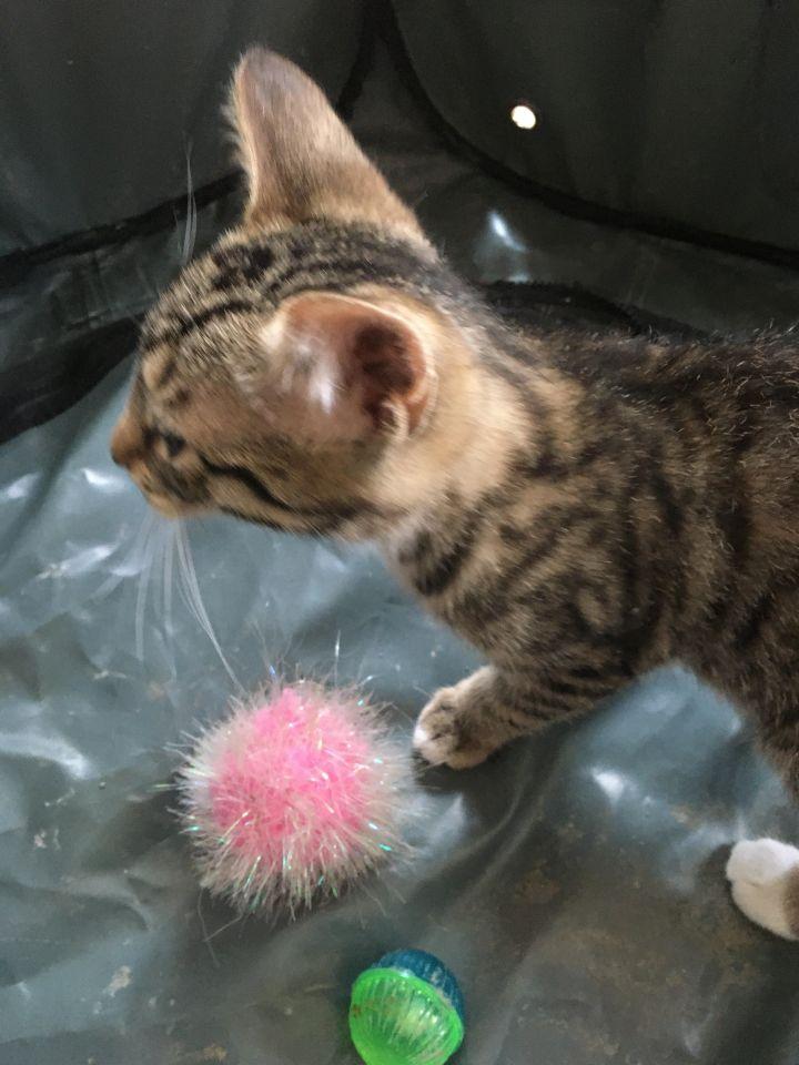 Peter Parker (Cushion kittens) 3