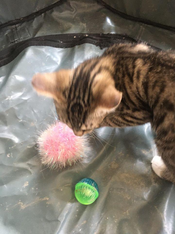 Peter Parker (Cushion kittens) 4