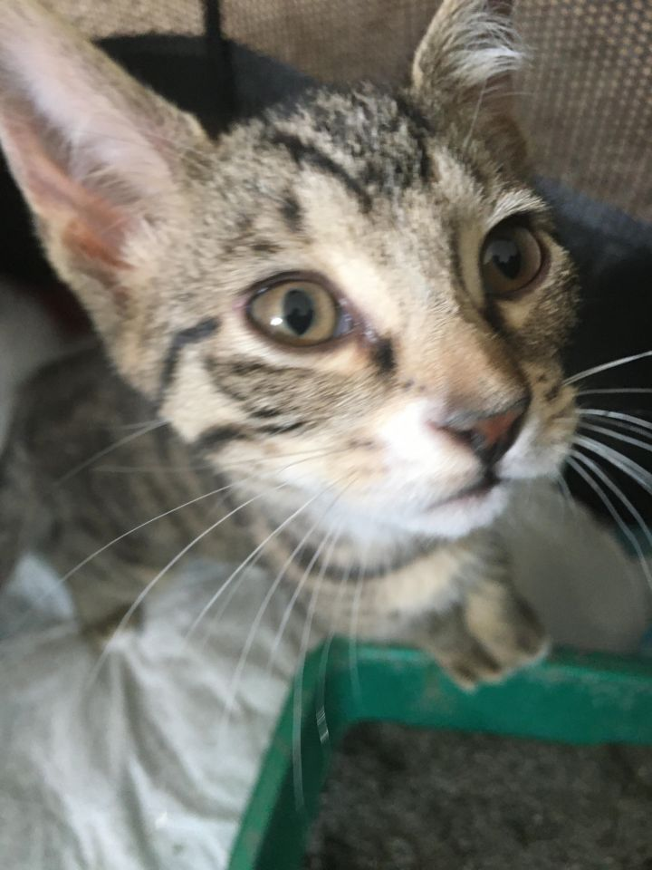Peter Parker (Cushion kittens) 5