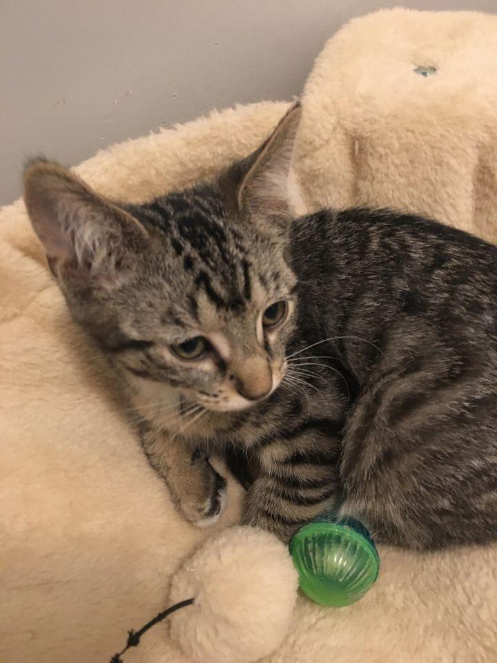 Wanda (Cushion kittens) 3