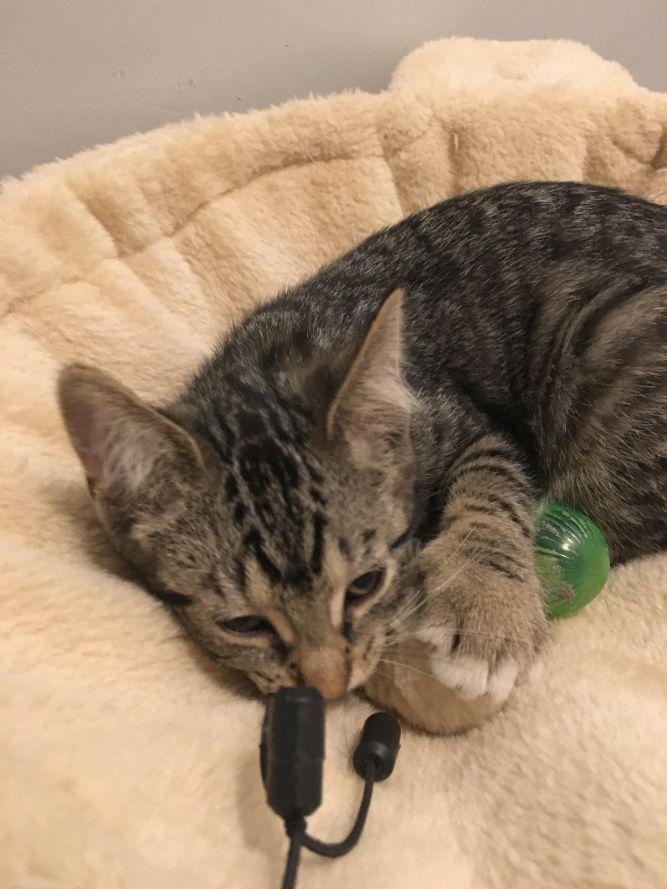 Wanda (Cushion kittens)