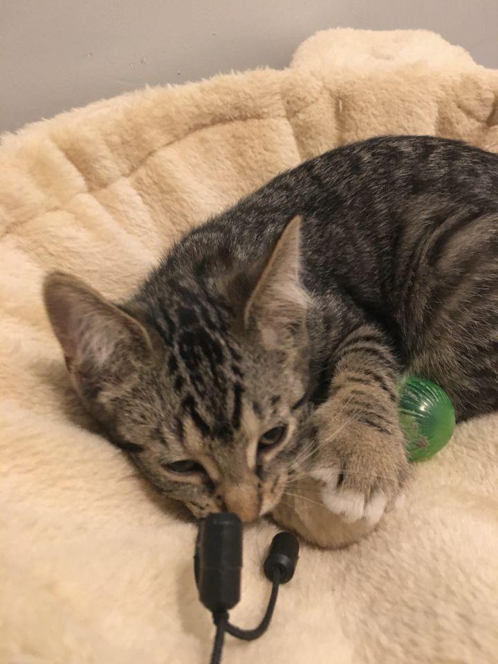 Wanda (Cushion kittens) 1