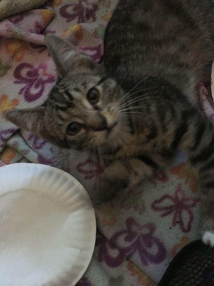 Wanda (Cushion kittens) 5