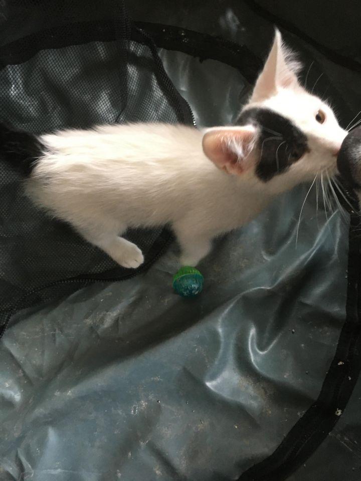 Tony Stark (Cushion kittens) 2