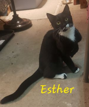 Oh Esther what a special little girl First of all she is extra small And while she is probably n