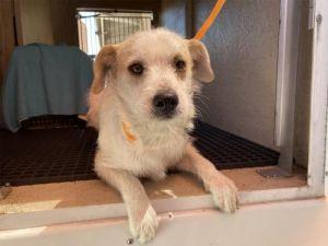 I1351508 Terrier Dog