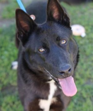 LEAH Mixed Breed Dog
