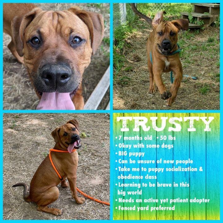 Trusty 5