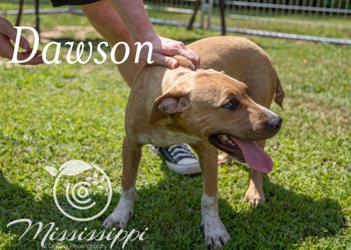 Dawson 4