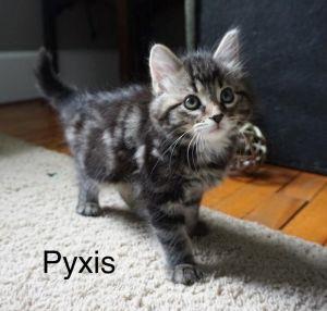 Photo of Pyxis
