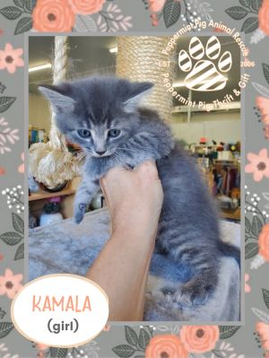 Kamala ADOPTION PENDING