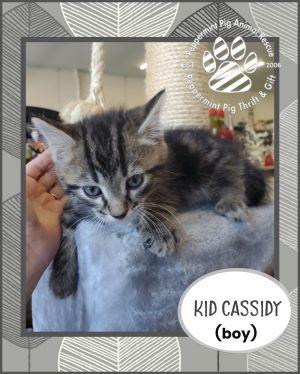 Kid Cassidy